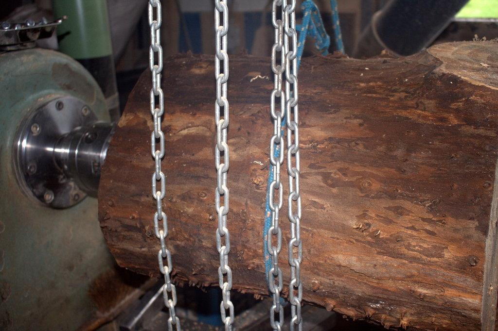 Zonder schors wordt er al iets van de structuur binnenin de boomstam zichtbaar.